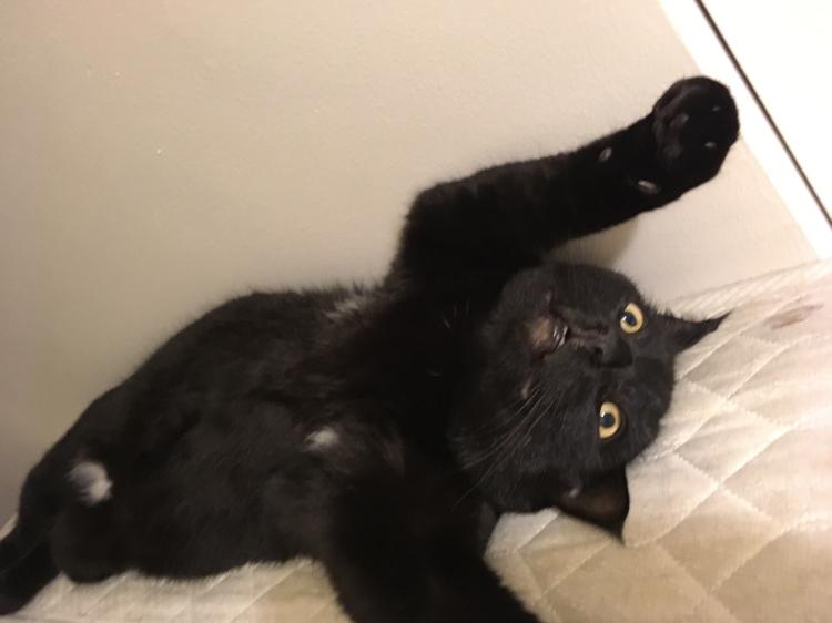 """Cat Magic """" Relaxing """""""